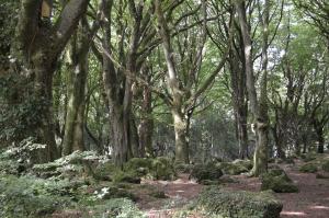 Barna Woods