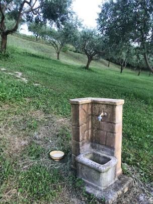 Lippo olive grove