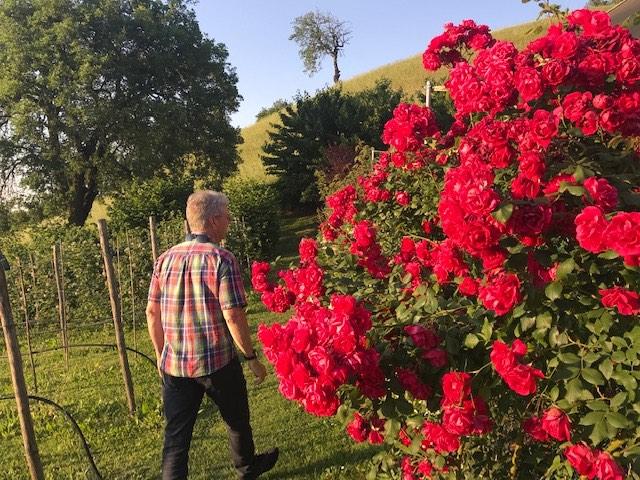Lippo roses